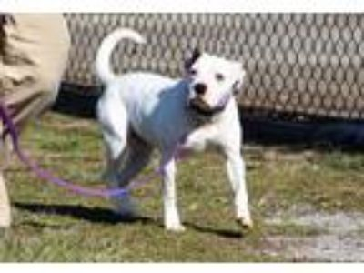 Adopt LIZZIE - Paws Behind Bars a White - with Black Mixed Breed (Medium) /