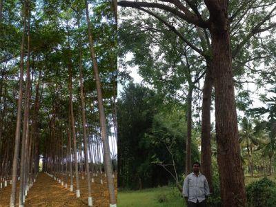Farmland for sale near Hyderabad with Free Resort Membership