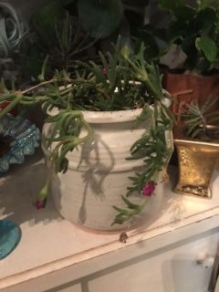 Pretty draping plant with pink blooms in a vintage crock