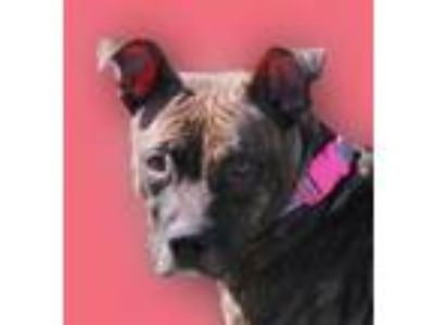 Adopt Yasmine a Mixed Breed
