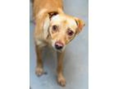 Adopt REX a Terrier (Unknown Type, Small) / Mixed dog in Redwood City