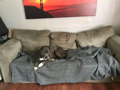 FREE COUCH WITHOUT THE DOG