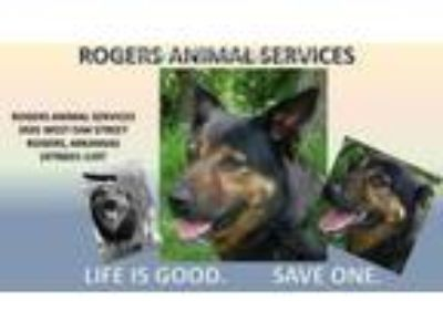 Adopt ROXY a German Shepherd Dog, Mixed Breed