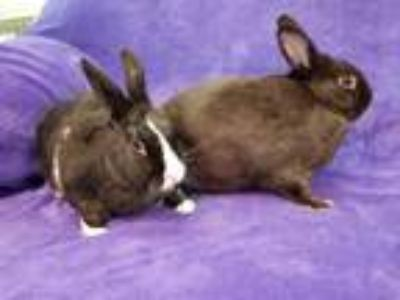 Adopt Buster and Turtle a Bunny Rabbit