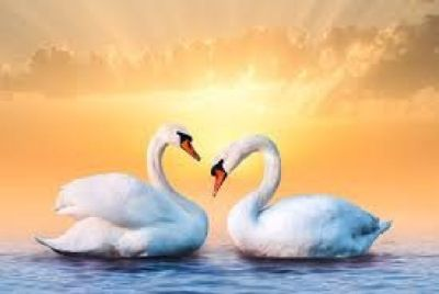 Community Qigong | Peaceful Mind, Joyful Heart