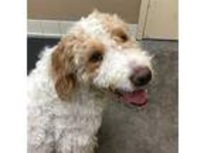 Adopt Gilgamesh a Mixed Breed (Large) / Mixed dog in Spokane Valley