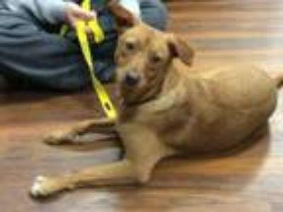 Adopt Ellie a Hound, Terrier