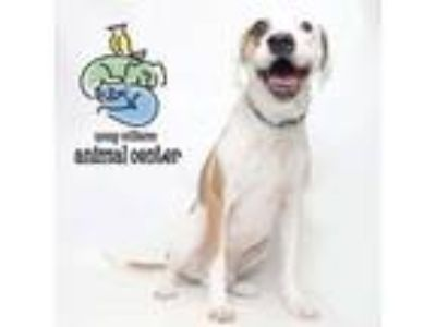 Adopt Lucky a Mixed Breed