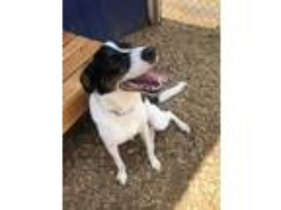 Adopt Bella a Black Border Collie / Mixed dog in Cumming, GA (23273652)