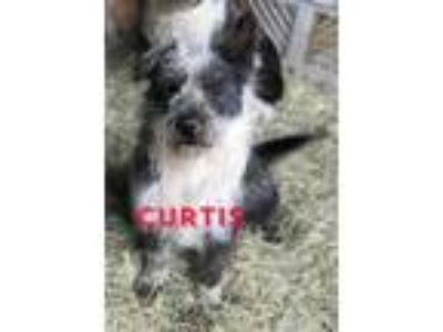 Adopt Curtis CG in MS a Terrier
