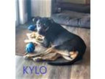 Adopt Kilo a Hound, German Shepherd Dog