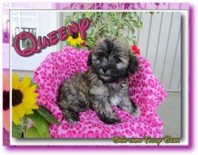 Queeny Shih-Chon Teddy Bear