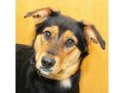Adopt Lucy a Black Mixed Breed (Large) / Mixed dog in Lansing, MI (25300066)