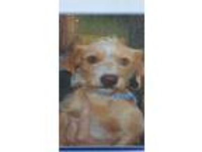 Adopt Pita a Terrier (Unknown Type, Small) / Mixed Breed (Medium) / Mixed dog in