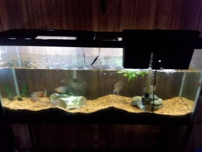 55 gallon fish tank with steel stand and fish