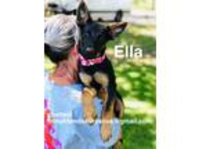 Adopt ELLA a Black - with Tan, Yellow or Fawn German Shepherd Dog / Mixed dog in