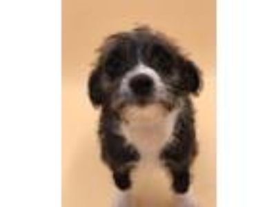 Adopt Janice a Terrier (Unknown Type, Small) / Mixed dog in Thousand Oaks