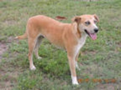 Adopt HOPE a Tan/Yellow/Fawn - with White Mixed Breed (Medium) / Mixed dog in