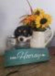 Simba Miniature Pinscher - Chihuahua Dog