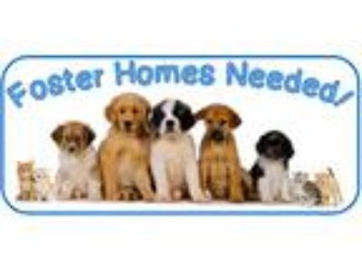 Adopt Puppy Foster Homes Needed a Black Mixed Breed (Medium) / Mixed dog in