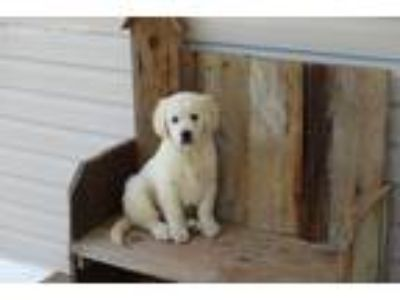 Craigslist Animals And Pets For Adoption Classifieds In Ripley