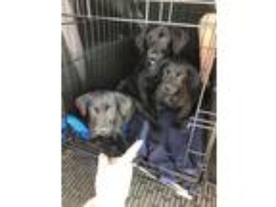 Adopt Urgent fosters needed for puppies a Dachshund / Mixed dog in Valrico