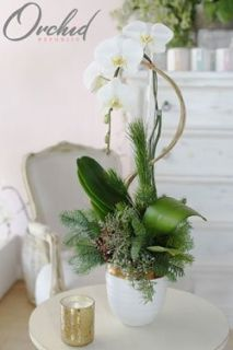Frosted Christmas - Orchid Arrangement