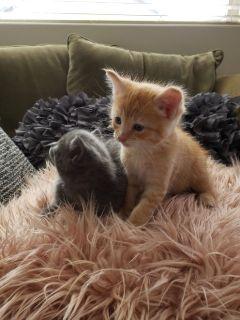 Kittens - no longer available !!