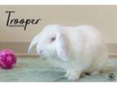 Adopt Trooper a Bunny Rabbit
