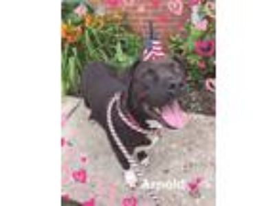 Adopt Arnold a Mixed Breed