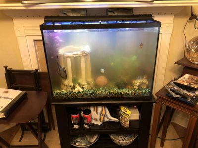 Fish tank with fish, pumps, stand, etc....