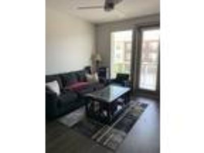 Roommate wanted to share One BR One BA Apartment...