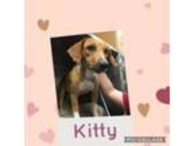 Adopt Kitty a Black Mouth Cur