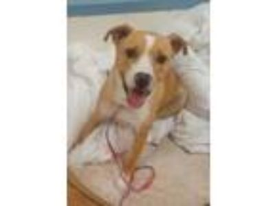Adopt Vivi a Tan/Yellow/Fawn Retriever (Unknown Type) / Mixed dog in Brownwood