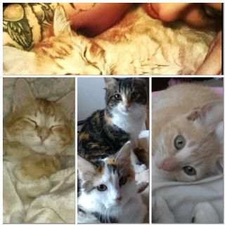 Help someone stole my kids cats please
