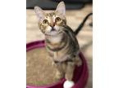Adopt Cooper & Colby (HS) 3.10.19 a Tabby