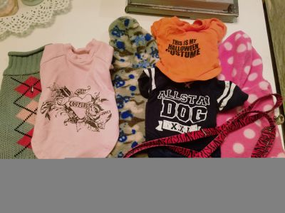 Pet Dog Cat Kitten Lot (XS - Small)