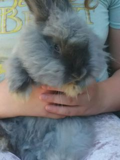 Fluffy bunny looking for its forever home!
