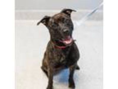 Adopt Grover a Black Mixed Breed (Large) / Mixed dog in Lansing, MI (24796602)