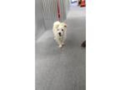 Adopt Theo a Terrier (Unknown Type, Small) / Mixed dog in Hemet, CA (25587665)