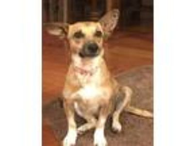 Adopt Martina (FOSTER HOME) a Tan/Yellow/Fawn Terrier (Unknown Type