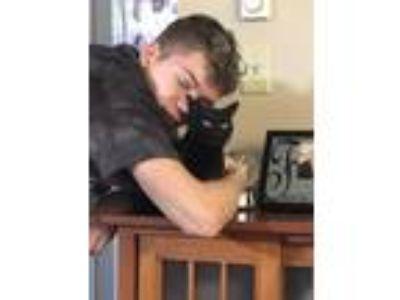 Adopt Harley a All Black Domestic Shorthair cat in Nashua, NH (25878195)