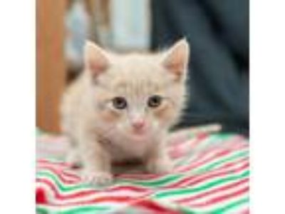 Adopt Zorro a Tan or Fawn Tabby Domestic Shorthair cat in Los Angeles