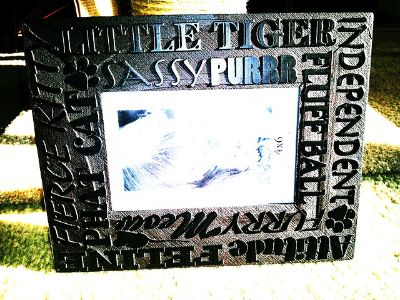 $15, Exceptional Cat Frame