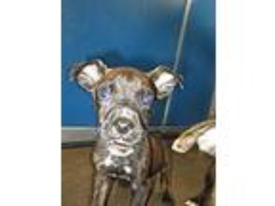 Adopt Cage 10 May 9 m1 a Boxer