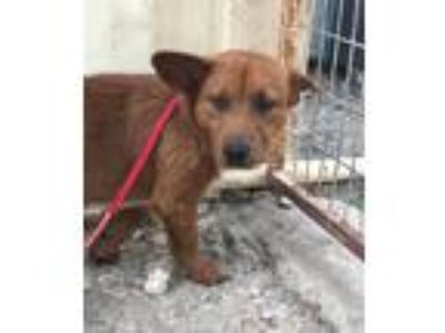 Adopt Sinbad a Norwich Terrier dog in Bowmansville, NY (25346235)