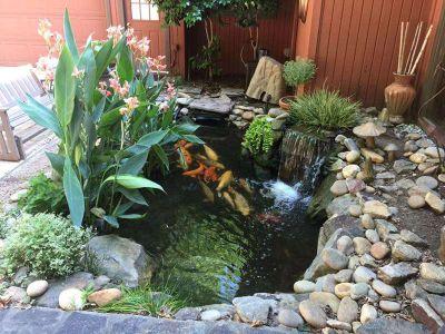 Quality Pond Installation, Koi Ponds