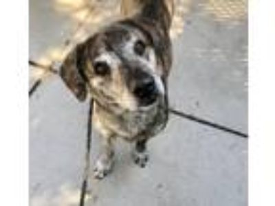 Adopt Shakespeare a Hound, Terrier