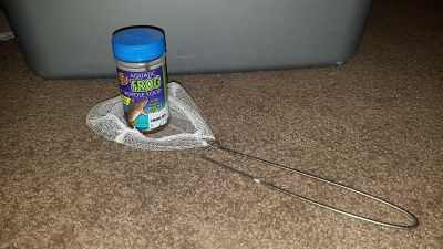 FREE Frog Food and Net