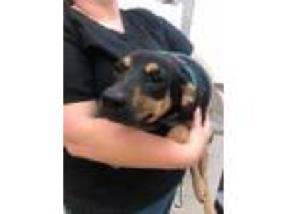 Adopt Cous Cous a Black Mixed Breed (Large) / Mixed dog in Munster